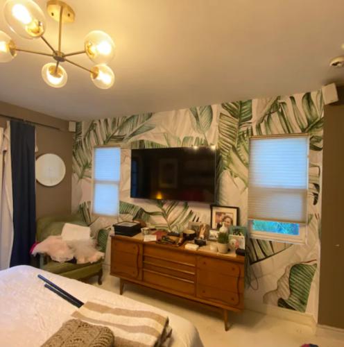 Majesty palm photo review