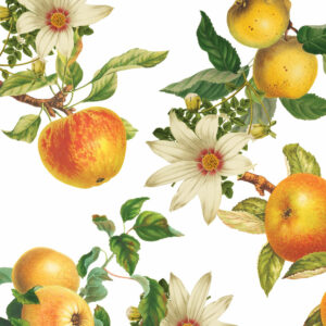 Summer apple juicy and floral