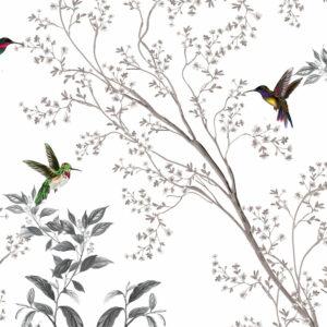 Colibris in spring season