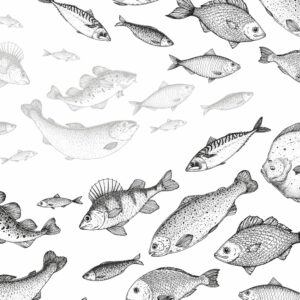 fishes wallpaper