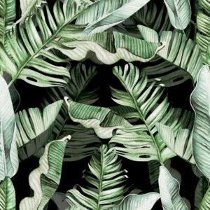 Mediterranean palms
