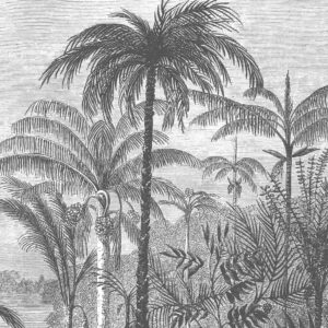 Palm of the Ucayali Amazon